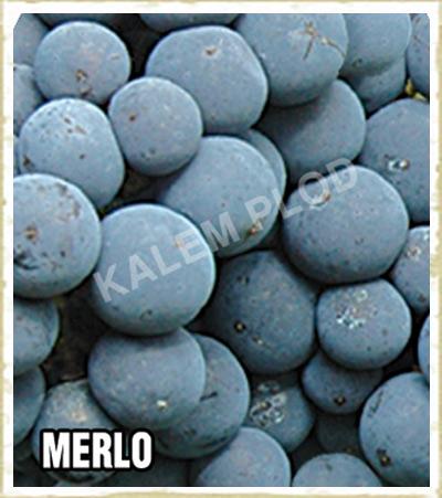 Lozni kalem Merlo