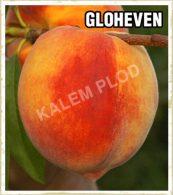 Prodaja sadnica breskva Gloheven