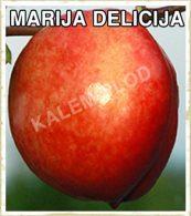 Prodaja sadnica breskva Marija Delicija