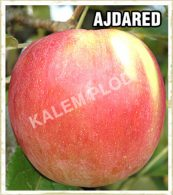 Prodaja sadnica jabuka Ajdared