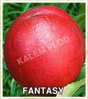 Prodaja sadnica nektarina Fantasy