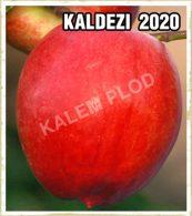 Prodaja sadnica nektarina Kaldezi 2020