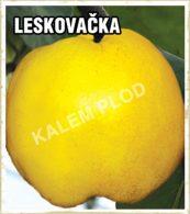 Sadnice dunja Leskovacka