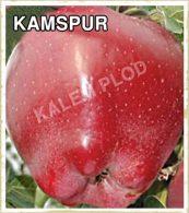Sadnice jabuka Kamspur