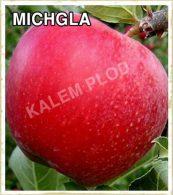 Sadnice jabuka Michgla
