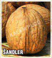 Sadnice orah Sandler