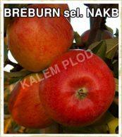 Sadnice voca jabuka Breburn sel nakb