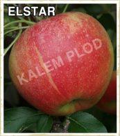 Sadnice voca jabuka Elstar