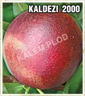 Sadnice voca nektarina Kaldezi 2000