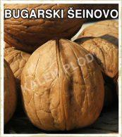 Sadnice voca orah bugarski seinovo