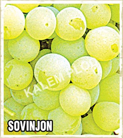 Vinova loza Sovinjon