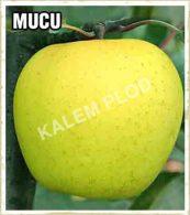 Vocne sadnice jabuka Mucu