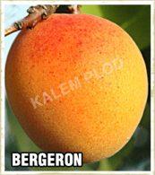 Vocne sadnice kajsija Bergeron