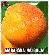 Vocne sadnice kajsija Madjarska najboljaVocne sadnice kajsija Madjarska najboljaVocne sadnice kajsija Madjarska najbolja