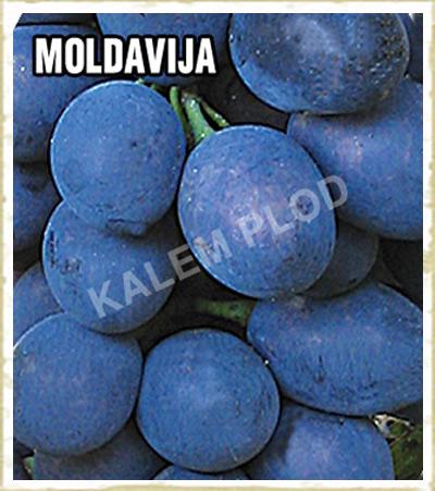 Lozni kalem Moldavija