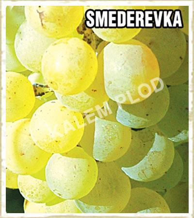 Lozni kalem Smederevka