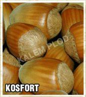 Prodaja sadnica lesnik Kosfort
