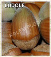 Prodaja sadnica lesnik Ludolf