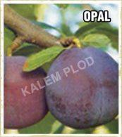 Prodaja sadnica sljiva Opal