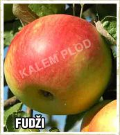 Sadnice jabuka Fudzi