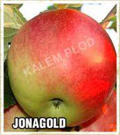 Sadnice jabuka Jonagold