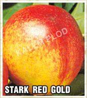 Sadnice nektarina Stark red gold