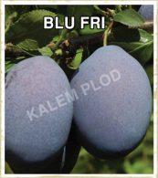 Sadnice sljiva Blu fri