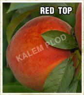 Sadnice voca breskva Red top