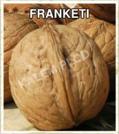 Sadnice voca orah Franketi