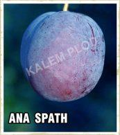 Sadnice voca sljiva Ana Spath