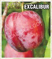Sadnice voca sljiva Excalibur