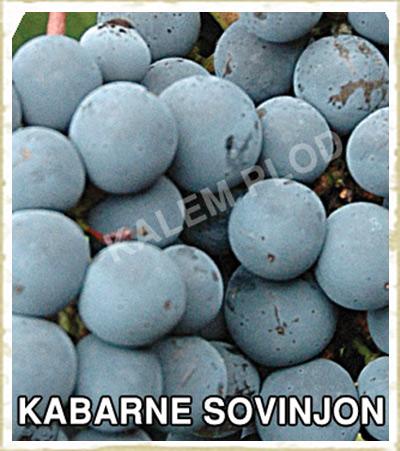 Vinova loza Kabarne sovinjon