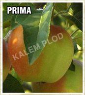 Vocne sadnice jabuka Prima